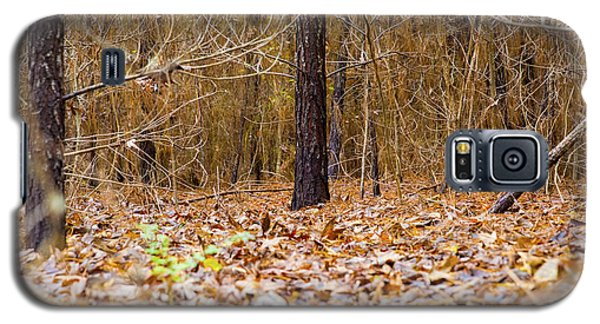 Forest Floor Galaxy S5 Case