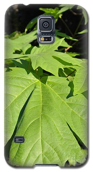 Forest Greens Galaxy S5 Case
