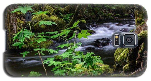 Forest Stream Galaxy S5 Case by Marion McCristall