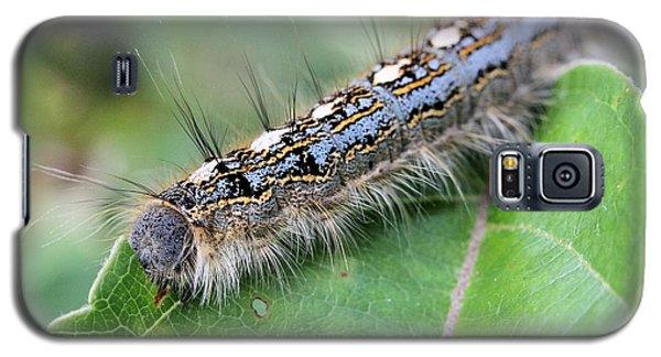 Forest Tent Caterpillar Galaxy S5 Case by Doris Potter