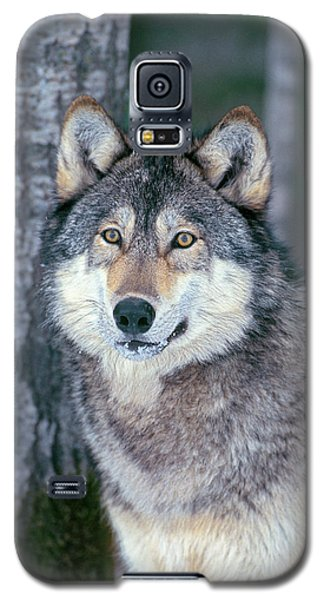 Forest Wolf Galaxy S5 Case