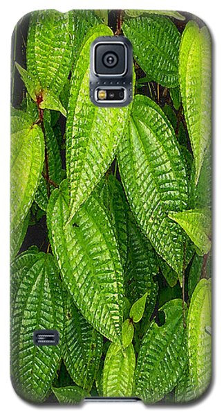 Forever Green Galaxy S5 Case