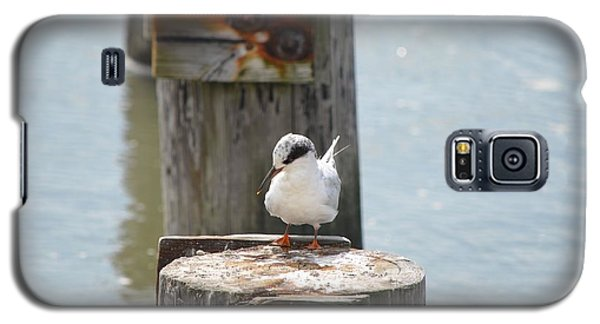 Forster's Tern Galaxy S5 Case by James Petersen