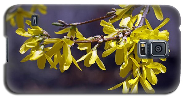 Galaxy S5 Case featuring the photograph Forsythia by Denise Pohl