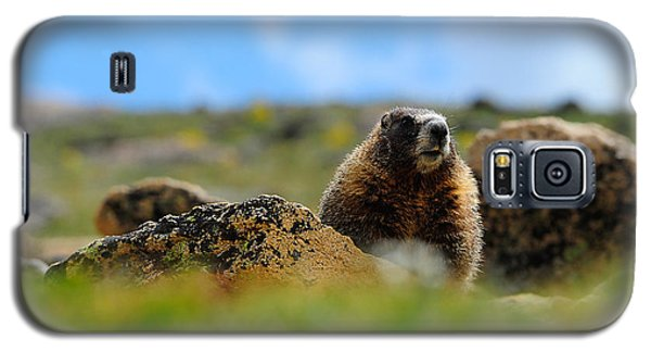 Fort Marmot Galaxy S5 Case