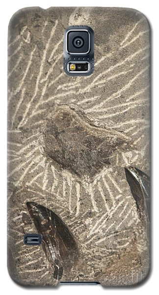 Fossil Shark Teeth Galaxy S5 Case by Artist and Photographer Laura Wrede