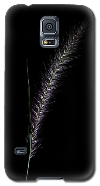 Fountain Grass Spike Galaxy S5 Case by Richard Stephen