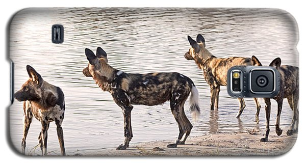 Four Alert African Wild Dogs Galaxy S5 Case