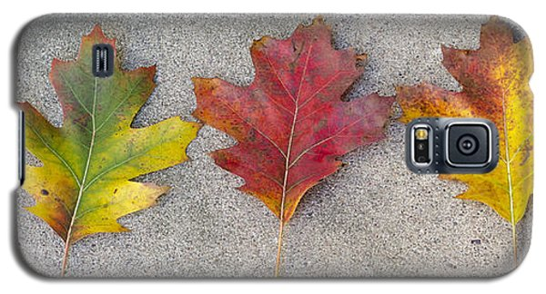 Four Autumn Leaves Galaxy S5 Case