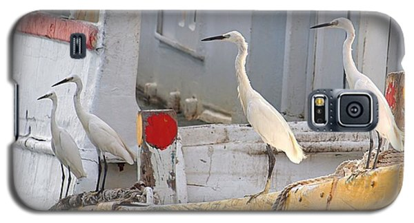 Four Egrets Watch For Fish Galaxy S5 Case by Yali Shi