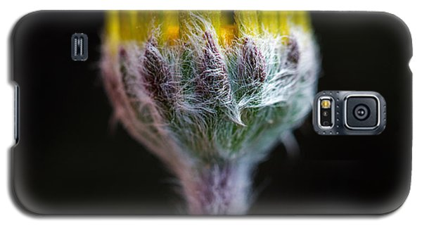 Four-nerve Daisy Bud Beginning To Open Galaxy S5 Case