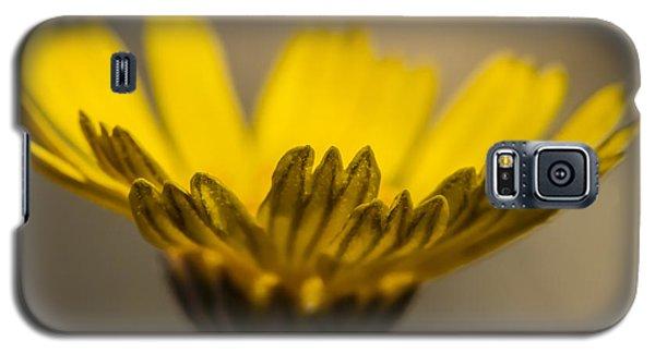 Four-nerve Daisy Galaxy S5 Case