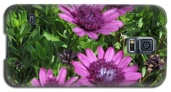Four Purple Flowers Galaxy S5 Case by Tina M Wenger