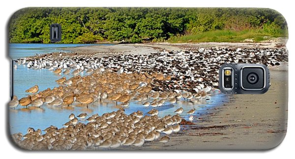 Galaxy S5 Case featuring the photograph Four Species Of Birds At Roost On Tampa Bay Beach by Jeff at JSJ Photography