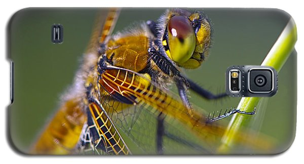 Four Spotted Chaser Galaxy S5 Case
