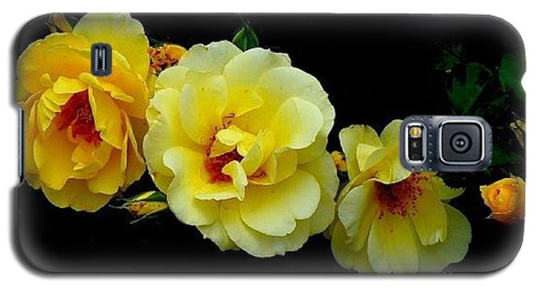 Galaxy S5 Case featuring the photograph Four Stages Of Bloom Of A Yellow Rose by Janette Boyd