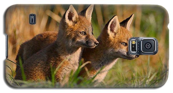 Fox Cubs At Sunrise Galaxy S5 Case