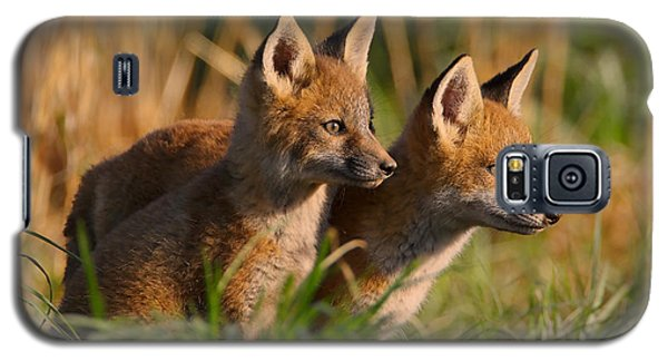 Fox Cubs At Sunrise Galaxy S5 Case