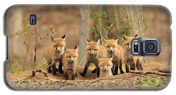 Fox Family Portrait Galaxy S5 Case by Everet Regal