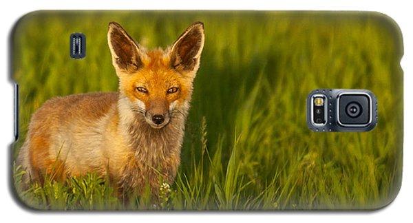 Fox In Grass  Galaxy S5 Case