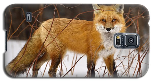Fox In Winter Galaxy S5 Case