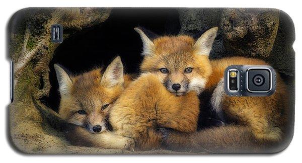 Best Friends - Fox Kits At Rest Galaxy S5 Case