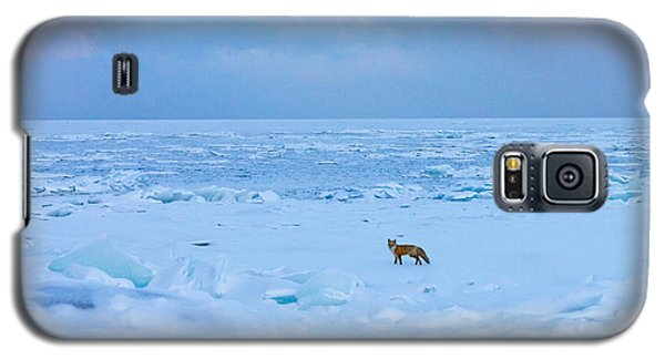 Fox Of The North Country Iv Galaxy S5 Case