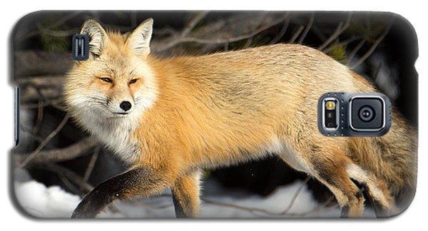 Fox On A Stroll Galaxy S5 Case