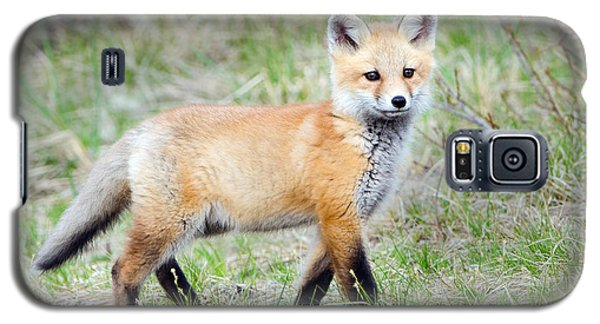 Fox Pup  Galaxy S5 Case by Stephen Flint