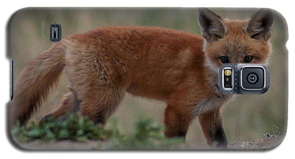 Fox Pup Galaxy S5 Case by Steven Reed