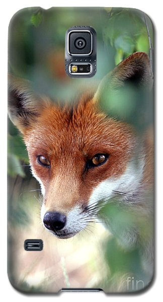 Fox Through Trees Galaxy S5 Case