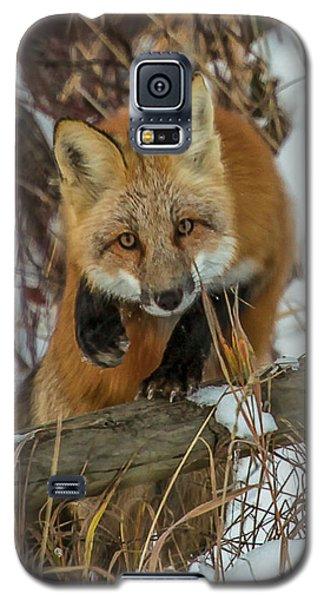 Fox Trot Galaxy S5 Case