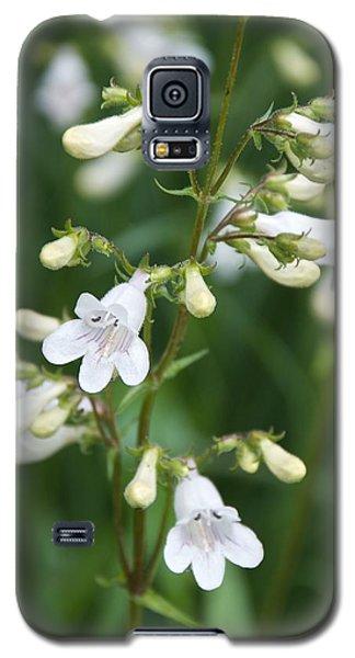 Foxglove Beardtongue Galaxy S5 Case