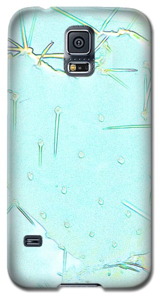 Galaxy S5 Case featuring the photograph Fragile Heart by Roselynne Broussard