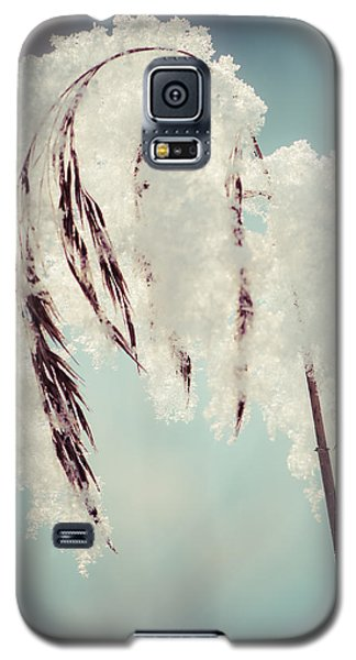 Fragile Winter Day Galaxy S5 Case