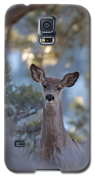 Galaxy S5 Case featuring the photograph Framed Deer Head And Shoulders by Duncan Selby