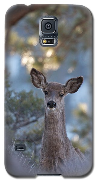 Framed Deer Head And Shoulders Galaxy S5 Case by Duncan Selby