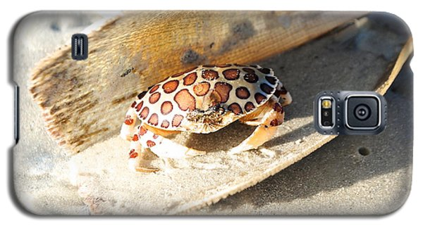 Frank The Spotted Crab Of Anna Maria Galaxy S5 Case by Margie Amberge