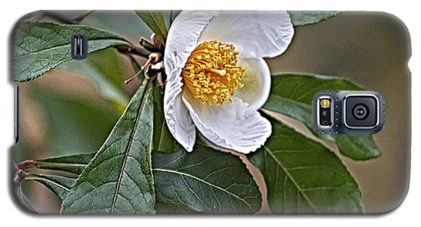 Franklinia Blossom  Galaxy S5 Case by Constantine Gregory