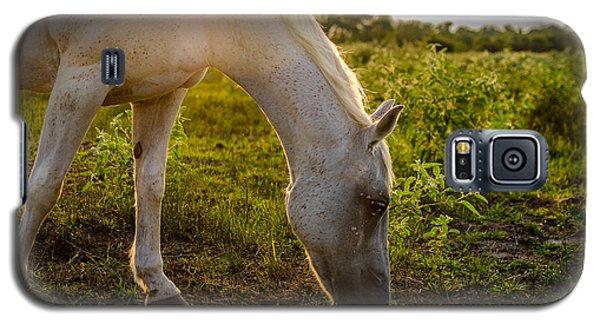 Freckles Pferd Galaxy S5 Case
