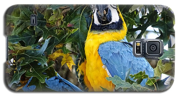 Galaxy S5 Case featuring the digital art Free Flying Macaws by Melissa Messick