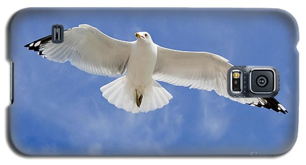 Galaxy S5 Case featuring the photograph Freedom Soar by Gina Savage