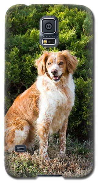French Brittany Spaniel Galaxy S5 Case