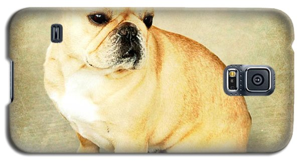 Galaxy S5 Case featuring the photograph French Bulldog Antique by Barbara Chichester