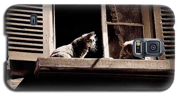 French Windowsill Cats In The Sun Galaxy S5 Case