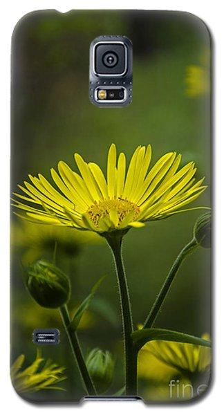 Galaxy S5 Case featuring the photograph Fresh In Juice by Bruno Santoro