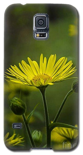Fresh In Juice Galaxy S5 Case by Bruno Santoro
