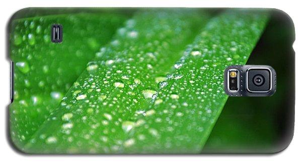 Fresh Rain Drops Galaxy S5 Case