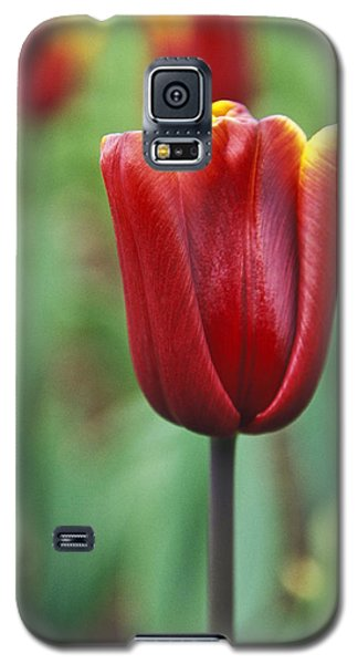 Galaxy S5 Case featuring the photograph Freshness  by Lana Enderle