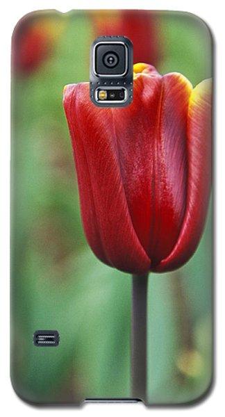 Freshness  Galaxy S5 Case